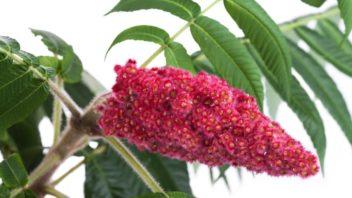 skumpa-orobincova-–-kvetni-laty-352x198.jpg