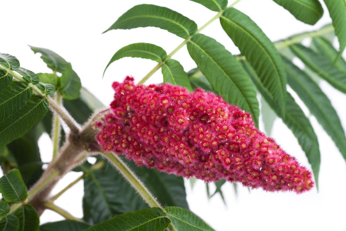 skumpa-orobincova-–-kvetni-laty.jpg