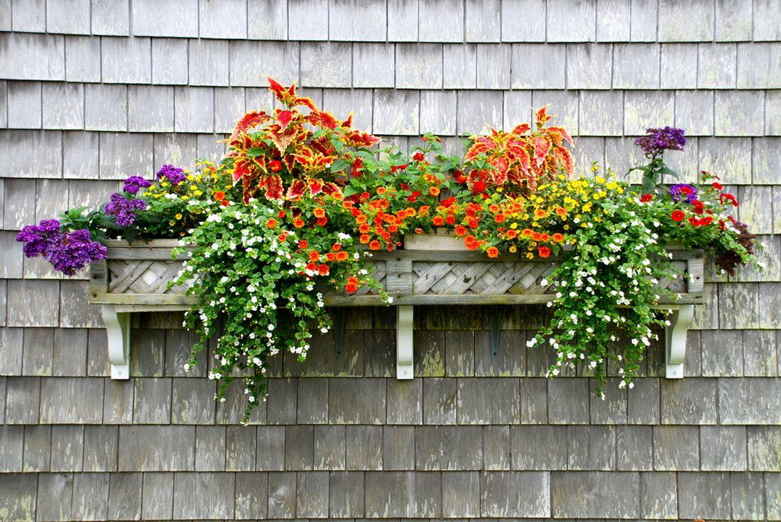 truhlik-balkonove-rostliny.jpg