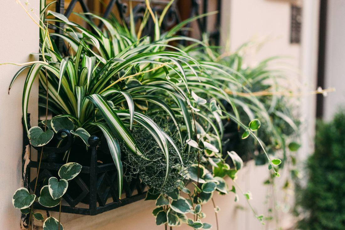 truhlik-pokojove-rostliny.jpg