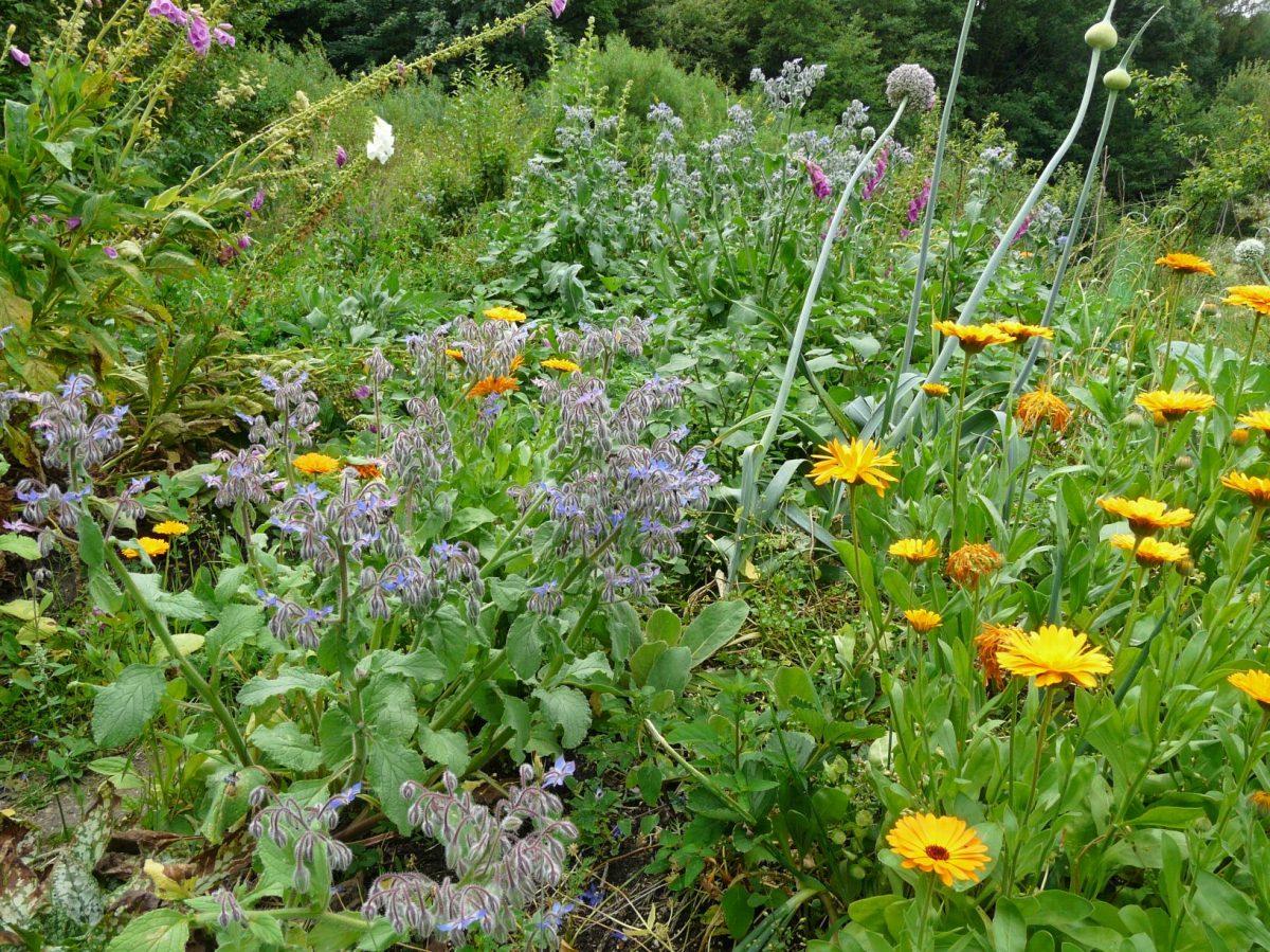 v-permakulturni-zahrade-slovo-plevel-pomalu-ani-nezname-rostliny-jsou-sazeny-huste-a-kdyz-se-nejaky-plevel-objevi-vetsinou-nepredsatvuje-velky-problem-1200x1200.jpg