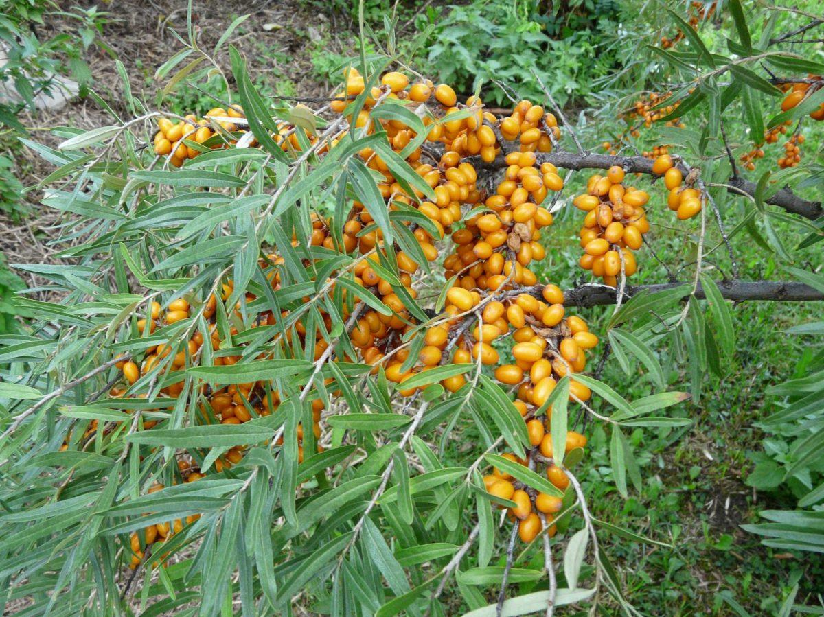 v-sadu-nemusi-chybet-ani-drobne-ovoce-1200x1200.jpg