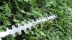 behem-leta-je-treba-provest-druhy-tvarovaci-rez-zivych-plotu-144x81.jpg