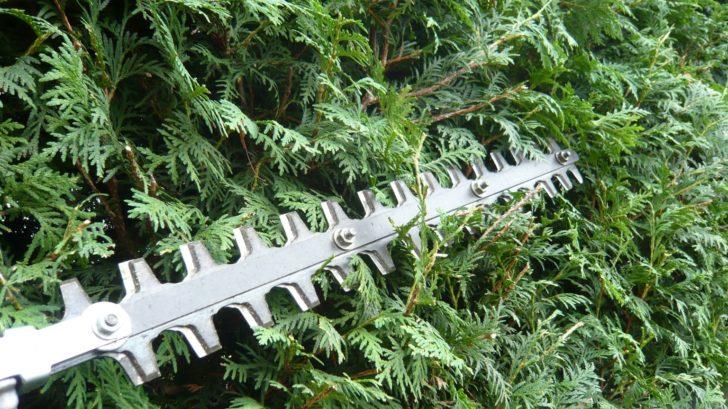 behem-leta-je-treba-provest-druhy-tvarovaci-rez-zivych-plotu-728x409.jpg