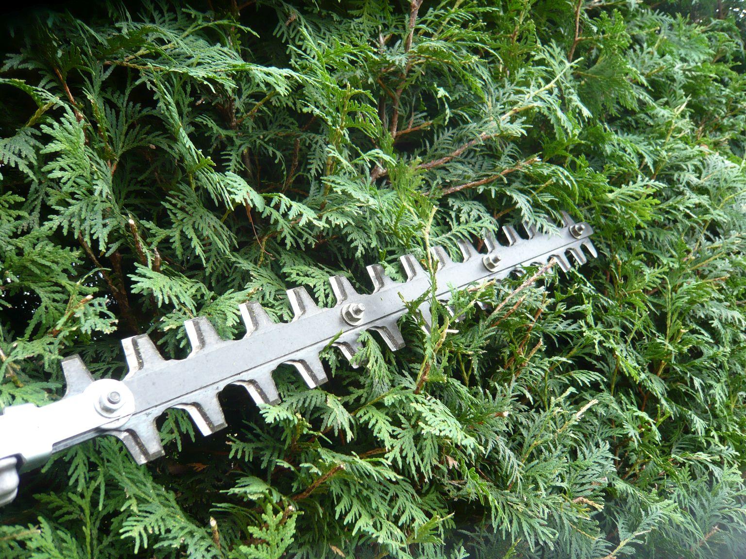 behem-leta-je-treba-provest-druhy-tvarovaci-rez-zivych-plotu.jpg