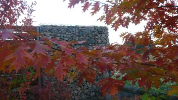cervena-ani-oranzova-barva-nejsou-pro-ceske-druhy-drevin-typicke-spise-je-hledejte-u-tech-asijskych-352x198.jpg