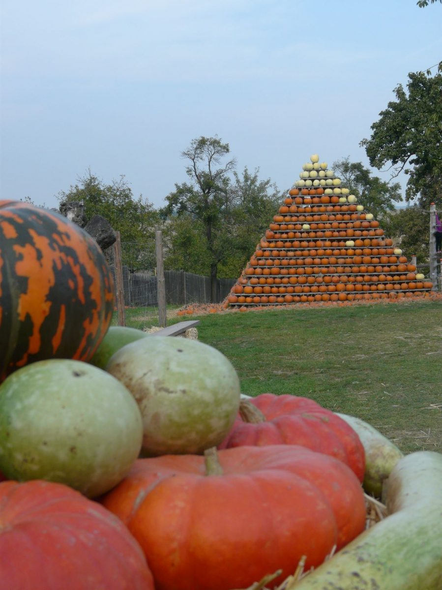 dyne-mame-zazite-jako-podzimni-zeleninu-ale-muzete-si-je-uzivat-uz-behem-leta-kdy-prubezne-dozravaji-1200x1200.jpg