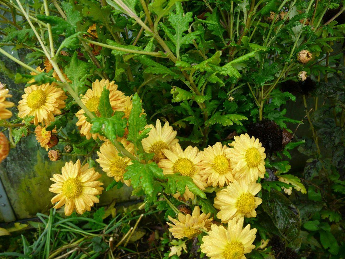 hrnkovane-rostliny-lze-vysadit-na-zahradu.-pokud-preziji-mohou-zde-rust-i-nekolik-let-1200x1200.jpg