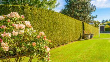 husty-zivy-plot-je-idealni-ochranou-soukromi-na-zahrad-352x198.jpg