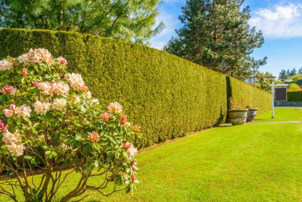 husty-zivy-plot-je-idealni-ochranou-soukromi-na-zahrad-614x410.jpg