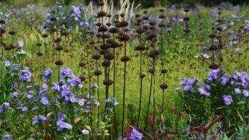 na-podzim-vyniknou-suche-semeniky-trvalke-352x198.jpg