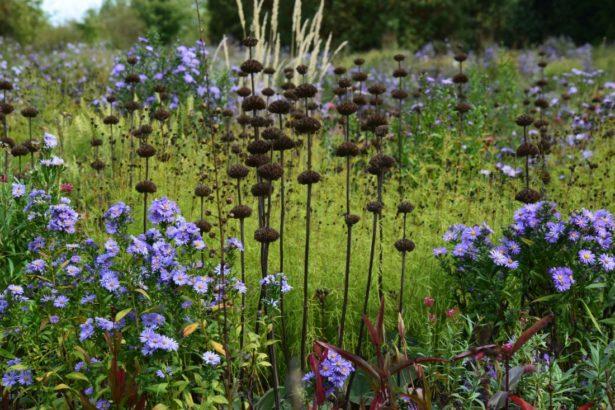na-podzim-vyniknou-suche-semeniky-trvalke-615x410.jpg