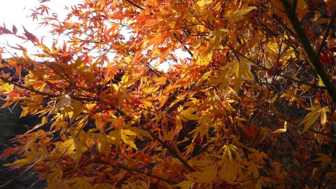 pestrobarevne-listi-vnese-do-zahrady-zcela-jinou-atmosferu-1100x618.jpg