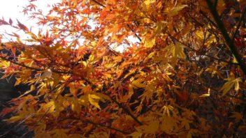 pestrobarevne-listi-vnese-do-zahrady-zcela-jinou-atmosferu-352x198.jpg