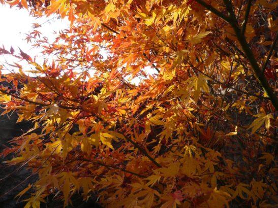 pestrobarevne-listi-vnese-do-zahrady-zcela-jinou-atmosferu-547x410.jpg