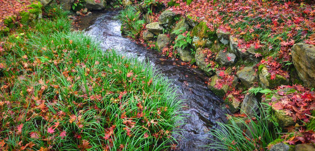 podzim-u-zahradniho-potoka.jpg