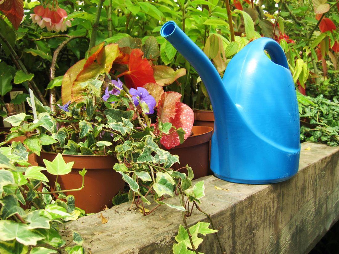 pred-odjezdem-na-dovolenou-sve-kvetinove-truhliky-dostatecne-zalijte.jpg