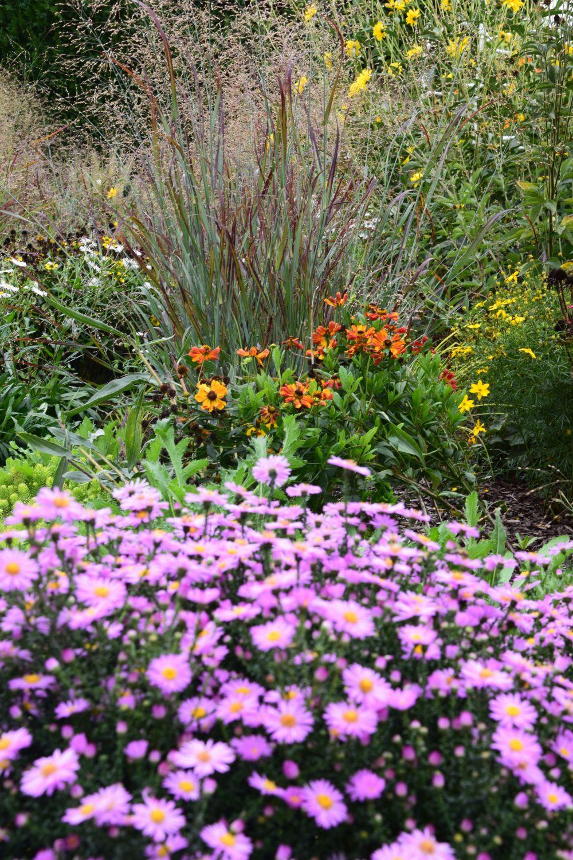 pri-planovani-trvalkovych-zahonu-je-treba-znat-rostlinny-sortiment.jpg