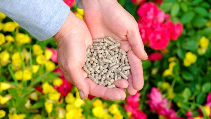 pro-hnojeni-muzete-pouzit-dobre-rozlozeny-kompost-nebo-specialni-hnojivo-na-ruze-728x409.jpg