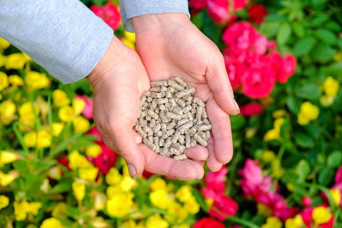 pro-hnojeni-muzete-pouzit-dobre-rozlozeny-kompost-nebo-specialni-hnojivo-na-ruze.jpg