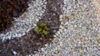 ruzne-druhy-mulcovacich-materialu-muzeme-pusobivym-zpusobem-kombinovat-144x81.jpg