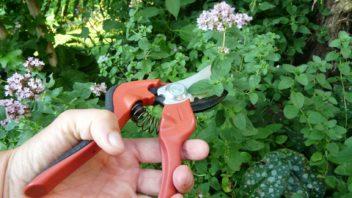 sklizen-bylinek-lze-behem-sezony-nekolikrat-zopakovat-rostliny-opakovane-obrustaji-352x198.jpg