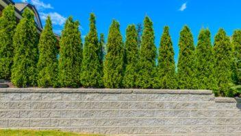 soukromi-na-zahrade-pomuze-zajistit-kombinace-klasickeho-a-ziveho-plotu-352x198.jpg