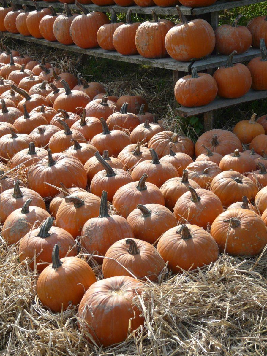 tykve-odrudy-halloween-1200x1200.jpg