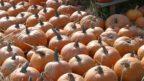 tykve-odrudy-halloween-144x81.jpg