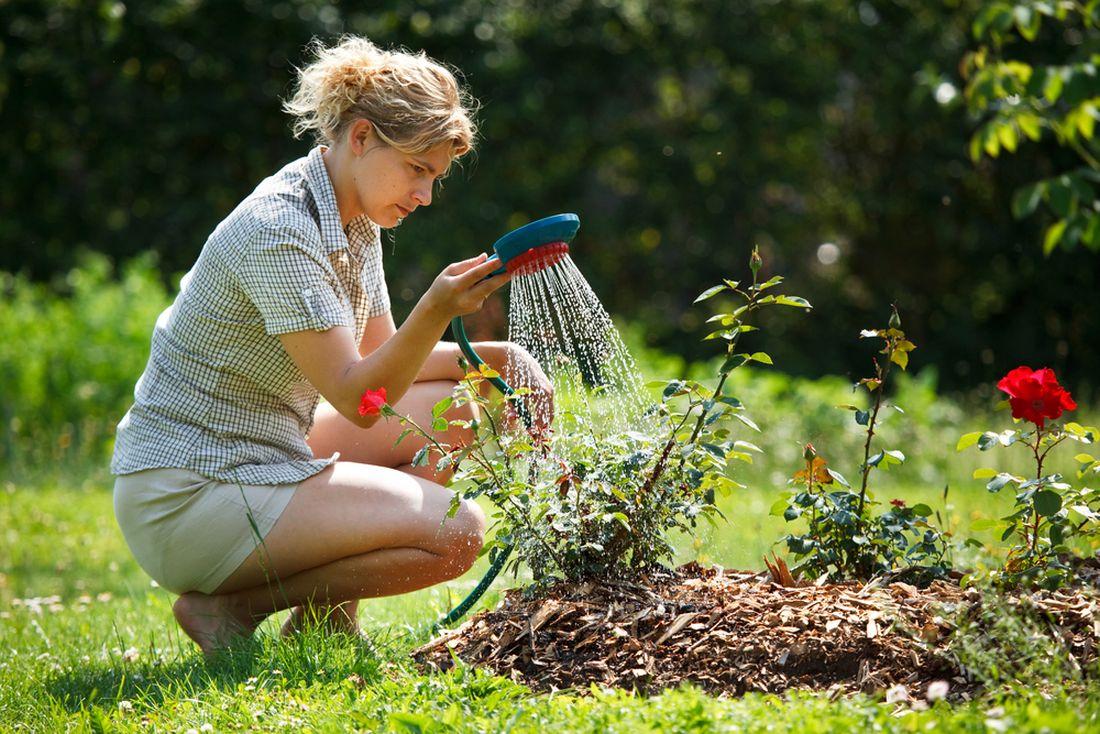 zalivka-je-dulezita-u-nove-vysazenych-rostlin-i-behem-horkeho-leta.-zalevejte-nejlepe-vecer-kdy-nedochazi-k-tak-intenzivniho-vyparu-vody-z-pudy.jpg