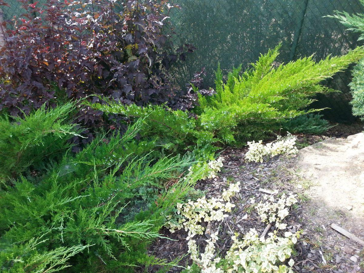 jednim-z-beznych-nesvaru-ceskych-zahrad-je-take-nadmerny-vyber-jehlicnanu-1200x1200.jpg