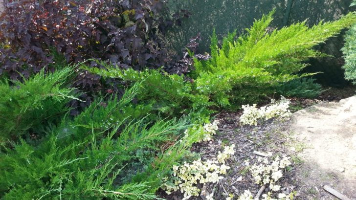 jednim-z-beznych-nesvaru-ceskych-zahrad-je-take-nadmerny-vyber-jehlicnanu-728x409.jpg