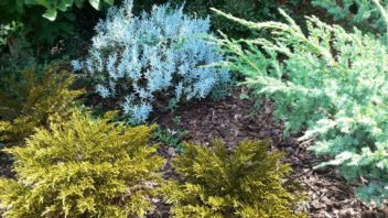 pri-vyberu-rostlin-se-nenechte-unest-jejich-mnohdy-netradicnimi-barvami-352x198.jpg