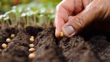 pro-rostliny-je-mimo-jine-dulezita-take-hodnota-ph-pudy-nejlepe-se-dari-vetsine-druhu-v-pude-s-ph-65.-prave-pri-teto-hodnote-dochazi-k-maximalnimu-prijmu-zivin-rostlinami-352x198.jpg