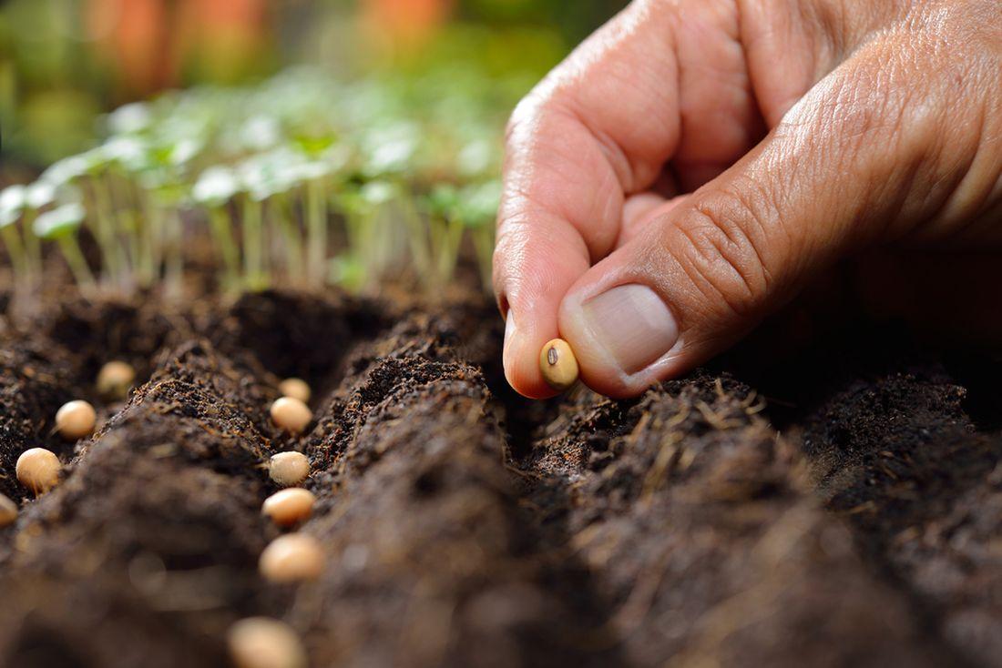 pro-rostliny-je-mimo-jine-dulezita-take-hodnota-ph-pudy-nejlepe-se-dari-vetsine-druhu-v-pude-s-ph-65.-prave-pri-teto-hodnote-dochazi-k-maximalnimu-prijmu-zivin-rostlinami.jpg