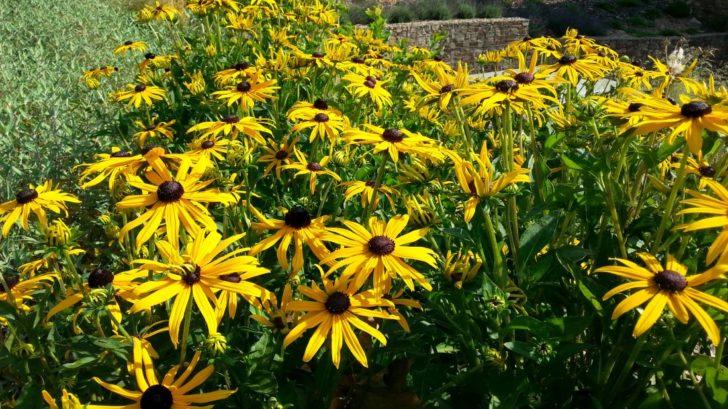 trapatka-zariva-je-hezka-nejen-v-dobe-kvetu-po-odkvetu-jsou-zajimave-i-jeji-semeniky-728x409.jpg