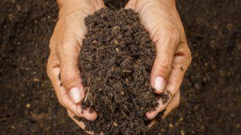 vetsina-rostlin-bude-nejlepe-prosperovat-v-hlinite-pude-ktera-je-idealni-po-vsech-strankach.-da-se-dobre-zpracovat-snadno-propousti-vodu-a-vzduch-a-dobre-drzi-ziviny-352x198.jpg