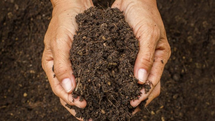 vetsina-rostlin-bude-nejlepe-prosperovat-v-hlinite-pude-ktera-je-idealni-po-vsech-strankach.-da-se-dobre-zpracovat-snadno-propousti-vodu-a-vzduch-a-dobre-drzi-ziviny-728x409.jpg