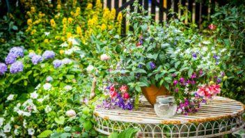 ackoli-se-jedna-o-rostliny-narocne-na-peci-preci-jenom-bychom-jim-to-meli-odpustit-kvuli-nevsednimu-vzhledu-i-krasnym-kvetum-352x198.jpg