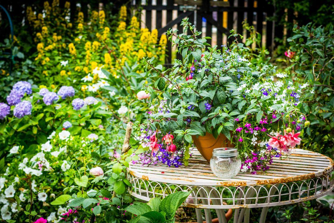 ackoli-se-jedna-o-rostliny-narocne-na-peci-preci-jenom-bychom-jim-to-meli-odpustit-kvuli-nevsednimu-vzhledu-i-krasnym-kvetum.jpg