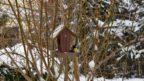 i-behem-zimy-ptaky-krmte-optimalne-prirozenou-stravou-a-neomezujte-se-vyhradne-na-lojove-koule-144x81.jpg