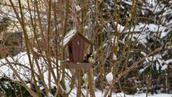 i-behem-zimy-ptaky-krmte-optimalne-prirozenou-stravou-a-neomezujte-se-vyhradne-na-lojove-koule-352x198.jpg