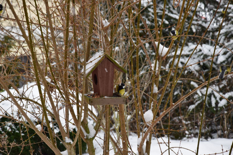 i-behem-zimy-ptaky-krmte-optimalne-prirozenou-stravou-a-neomezujte-se-vyhradne-na-lojove-koule.jpg