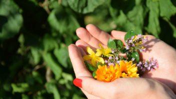 jedlymi-kvety-muzete-dozdobit-moucniky-omacky-i-pomazanky-352x198.jpg