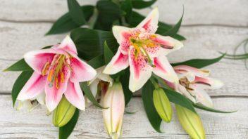 kvety-se-skvele-hodi-i-do-kytic-jen-je-treba-jim-vcas-odstranit-prasniky-bohate-na-pyl-ktery-vse-obarvi-352x198.jpg