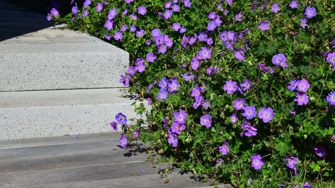 minimalisticka-zahrada-je-zalozena-na-malem-mnozstvi-prvku-i-druhu-rostlin-1100x618.jpg