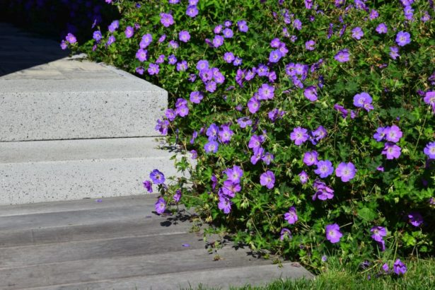 minimalisticka-zahrada-je-zalozena-na-malem-mnozstvi-prvku-i-druhu-rostlin-615x410.jpg