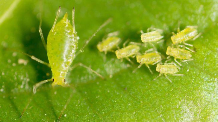 msice-radime-do-skupiny-saveho-hmyzu-728x409.jpg