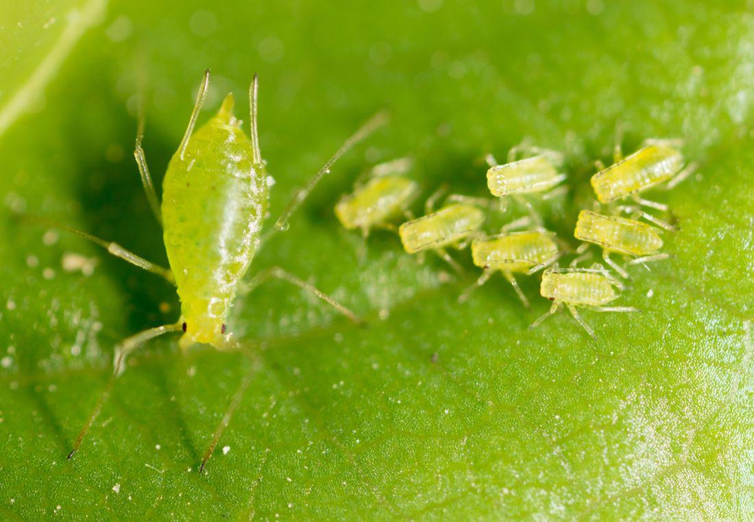 msice-radime-do-skupiny-saveho-hmyzu.jpg