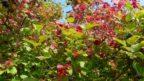 nektere-plody-vydrzi-na-vetvich-i-do-zimy-144x81.jpg